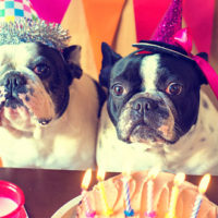 Celebrate Your Furry Friend: Throw a Dog Birthday Party