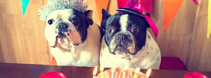 Celebrate Your Furry Friend: Throw a Dog Birthday Party